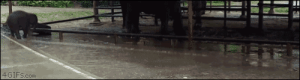 Target, Tumblr, and Blog: 4GIFS.com 4gifs:Puddles! [video]