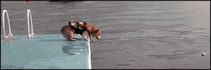 lol-support:  The most majestic leap I have ever seen: 4GIFS.com lol-support:  The most majestic leap I have ever seen