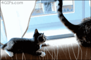 Messing with the wrong cat.: 4GIFS.com Messing with the wrong cat.