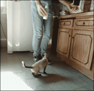 roachpatrol:  4gifs:  [video]  this gif keeps getting better : 4GIFS  .com roachpatrol:  4gifs:  [video]  this gif keeps getting better