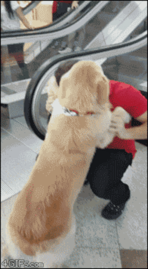 Tumblr, Blog, and Http: 4gifs:Escalators are scary. [video]