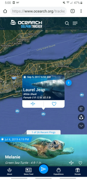 """Facepalm, News, and Shark: 5:00  84  a 47%  https://www.ocearch.org/tracke  1)  ulry  Hamden  OCEARCH  DOLPHIN TRACKERHaven  field  Madison-Old.Sayb  Milford  Bridgeport  Fairfield  Norwalk  Green  Long Island Sound  S  Riverhead  Hampton Bays  Commack  Sep 5, 2017 6:52 AM  495  le  2  Bay Sho  Great S Laurel Jean  Fi White Shark  Female 5 ft 12 in. 82.5 lb  igh  O Jul 4, 2019 4:19 PM  1 of 26 Recent Pings  Melanie  Green Sea Turtle -4 ft 1 in  About  News Feed  Expeditions  Donate  A 5' 12"""""""