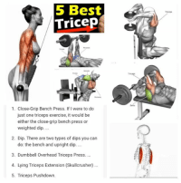 Memes, Exercise, and Athletics: 5 Best  Tricep  1. Close-Grip Bench Press. If I were to do  just one triceps exercise, it would be  either the close grip bench press or  weighted dip.  2. Dip. There are two types of dips you can  do: the bench and upright dip.  3. Dumbbell Overhead Triceps Press.  4. Lying Triceps Extension (Skullcrusher)  5. Triceps Pushdown. Top 5 tricep tricep exercises. fitness fitnessgoal fitnessjourney fitnesslifestyle fitnessgirl fitnesswomen fitnessaddict fitgirl fitfam fitpro training personaltrainer fitnessfreak fitnessjunkie athlete muscles upshowfit staypositive fitnesstips fitnesstime muscles fitgoals goals workout gym fitnesslife fitnesslove fitnessbody getfit inspire dreambig fitnesslife muscles