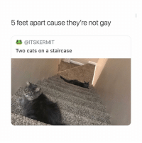 Cats, Girl Memes, and Feet: 5 feet apart cause they're not gay  @ITSKERMIT  Two cats on a staircase 2 bros