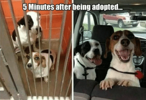 Animals, Dogs, and Memes: 5 Minutes after being adopted... Dog Memes Of The Day 32 Pics – Ep33 #dogs #doglovers #lovelyanimalsworld - Lovely Animals World