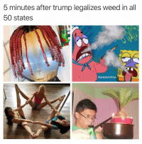 It's lit Fam 🤙: 5 minutes after trump legalizes weed in all  50 states  @grapejuiceboys It's lit Fam 🤙