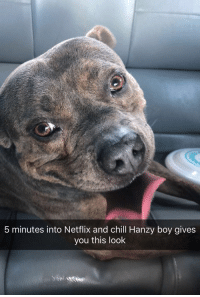 42 Cute Animal Memes That Never Stop Being Funny: 5 minutes into Netflix and chill Hanzy boy gives  you this look 42 Cute Animal Memes That Never Stop Being Funny