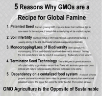 5 Reasons Why GMOs are a  Recipe for Global Famine  1. Patented Seed Farmers growing GMO crops are denied their traditional right to  2. Soil Infertility GMO agricuture is chemical intensive. Agrochemical buildup is  3. Monocropping/Loss of Biodiversity GMO agriculture is  4. Terminator Seed Technology This is designed to genetically switch  5. Dependency on a centalized food system A network of home  save seeds for the next year. If biotech fails suddenly they will be unable to replant.  causing sterility in the soil. Glyphosate herbicide is especially problematic.  monocropping, 75% of seed diversity has already been lost to industrial farming.  The Irish potato famine was the result of monocropping. Biodiversity is food security  off a plant's ability to germinate a second time. Plants with terminator genes can cross  pollinate with natural varieties causing otherwise fertile seed to be sterile.  gardens, and small to midsized farms offers far greater food security than a centralized,  globalized system. The bigger they come the harder they fal. Think global, eat local.  GMO Agriculture is the Opposite of Sustainable