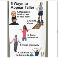 torso: 5 Ways to  Appear Taller  1. Mannequin  head on top  of your head  2. Giraffe  shoes  3. Torso  extensions  4. Hover ominously  Am big boy!  5. Go back  to 3rd grade  obvious  plant