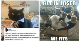 50 delicious cat memes!? You got that right! You're in for a treat, this week is simply jam-packed with cat memes!#cats #catmemes #funnycats #funnymemes #animalmemes: 50 delicious cat memes!? You got that right! You're in for a treat, this week is simply jam-packed with cat memes!#cats #catmemes #funnycats #funnymemes #animalmemes
