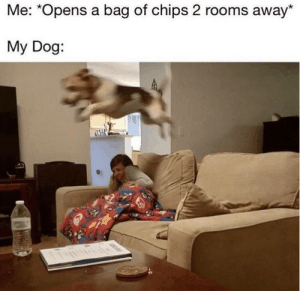 50 Pet Memes That Will Make You LOL Over And Over Again - Lovely Animals World: 50 Pet Memes That Will Make You LOL Over And Over Again - Lovely Animals World