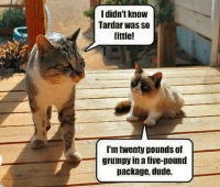 Join Grumpy Cat. for more smile emoticon: I didn't know  Tardar Was so  little!  I'm twenty pounds of  grumpy in a five-pound  package, dude. Join Grumpy Cat. for more smile emoticon