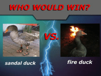 WHO WOULD  fire duck  sandal duck