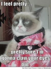 Join Animal Memes. if you love animals and laughing smile emoticon: I feel pretty  ...pretty  sure I'm  Jonna Claw Vour eves  Out  See More Crazy Pictures & Videos on Owned.com Join Animal Memes. if you love animals and laughing smile emoticon