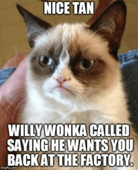 Animals, Anime, and Love: NICE TAN  WILLY WONKA CALLED  SAYING HE WANTS YOU  BACK AT THE FACTORYA  img flip com LIKE if you get it grin emoticon  Join Animal Memes. if you love animals and laughing grin emoticon