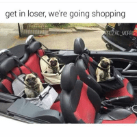 Funny, Life, and Shopping: get in loser, we're going shopping  PROZAC MORRI Pug life 👊 (prozac_morris)