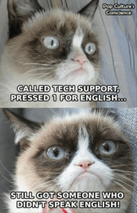 Pop Culture's  Conscience  CALLED TECH SUPPORT.  PRESSED 1 FOR ENGLISH  STILL GOT SOMEONE WHO  DIDNT SPEAK ENGLISH! join Grumpy Cat. for more ( : Animal Memes. !