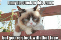 I maybe stuck Inths fence  but you're stuck with that face. Join Grumpy Cat. for more smile emoticon Animal Memes.