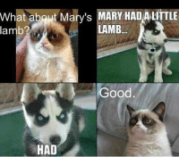 join Animal Memes.: What about Mary's MARY HADALITTLE  LAMB  lamb?  Good  HAD join Animal Memes.