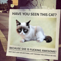Cats, Fucking, and Lost: HAVE YOU SEEN THIS CAT?  BECAUSE SHE IS FUCKING AWESOME!  SHE'S NOT LOST OR ANYTHING, JUST THOUGHT YOU SHOULD SEE HER. Who did this! I hate it.