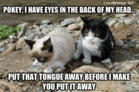 join Animal Memes.: C 2013  POKEYI HAVE EYES IN THE BACK OF MY HEAD.  PUTTHATTONGUE AWAY BEFORE IMAKE  YOU PUTITAWAY  guickmene ccm join Animal Memes.