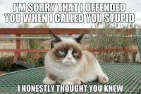 chek out Animal Memes. !: TIM SORRY THAT DOFFENDED  YOU WHEN CALLED YOU STUPID  HONESTLY THOUGHT YOU KNEW chek out Animal Memes. !