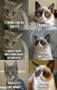 Grumpy Cat, Thank, and I Think: I THINK YOU'RE  PRETTY  I WISH THERE  WASSOMETHING  BETWEEN US  REALY  LIKE WHAT  THANKS  ME TOO  A WALL repost..