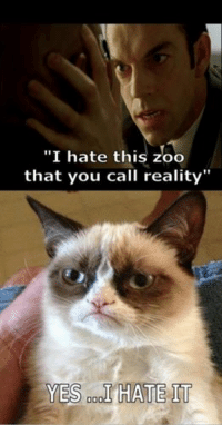 """What is the Matrix....: """"I hate this zoo  that you call reality""""  YES 000  HATE IT What is the Matrix...."""