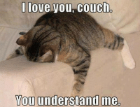 Couch understands me heart emoticon Join Animal Memes. for more smile emoticon: I love you, Couch  You understand me, Couch understands me heart emoticon Join Animal Memes. for more smile emoticon