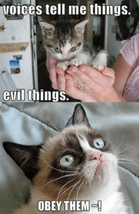 Cats, Grumpy Cat, and Evil: MOICes tell me things.  evil things.  OBEY THEM Obey them!!!!! -________- Grumpy Cat. #grumpycat