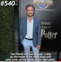 Memes, Tattoos, and Capital:  #540  LLYWO  tertainment Capital of L.A.  RDING  RLD OF  MYPOTTAR FACTS  Tom Felton has two tattoos: a dog  on the inside of his right bicep and  palm trees on the inside of his right ankle. QOTD: Do you have a tattoo- would you ever get a tattoo, and if so of what? 💮⚜️🖌 . @forevermaddy_ @hpfashion934