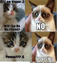 please no: Lam Ginger :3  Will You Be  My Friend?  Please???  NO  YES YES YES  https://www.facebook.com/Ginger.sweetcat