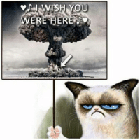 Cats, Grumpy Cat, and Smile: WISH YOU  WERE HERE Join Grumpy Cat. smile emoticon