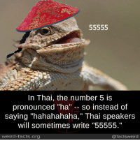 "number 5: 55555  In Thai, the number 5 is  pronounced ""ha  so instead of  saying ""hahahahaha,"" Thai speakers  will sometimes write ""55555.""  weird-facts.org  @facts weird"
