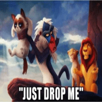"""Join Animal Memes. smile emoticon: """"JUST DROP ME"""" Join Animal Memes. smile emoticon"""