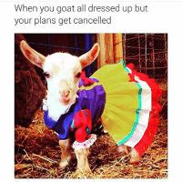 When you goat all dressed up but  your plans get cancelled