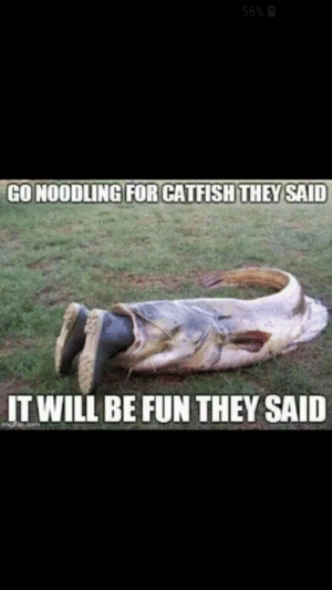 Catfished, Fun, and Com: 56%  GO NOODLING FOR CATFISH THEY SAID  IT WILL BE FUN THEY SAID  gip com Yep I can see that happening