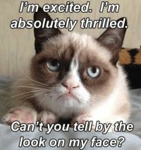 Cats, Grumpy Cat, and Excite: Pm excited. Prm  absolutely thrilled  Can't you tell by the  look on my face? Join Grumpy Cat. smile emoticon