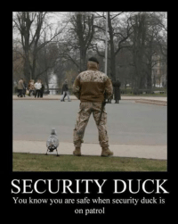 Ducks: SECURITY DUCK  You know you are safe when security duck is  on patrol