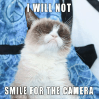 Cats, Grumpy Cat, and Camera: WILL NOT  SMILE FOR THE CAMERA  com T  Rea Grumpy cat  www Grumpy Cats com www.face Join Grumpy Cat. smile emoticon