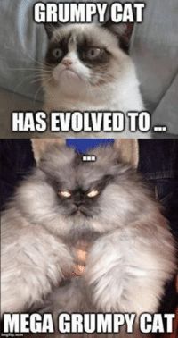 Join Animal Memes. smile emoticon: GRUMPY CAT  HAS EVOLVED)TO  MEGA GRUMPYCAT  imgflip com Join Animal Memes. smile emoticon