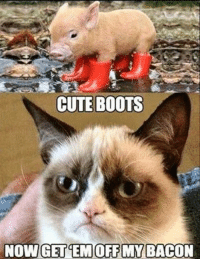 Cats, Cute, and Grumpy Cat: CUTE BOOTS  NOW GET EMOFF MY BACON Join Grumpy Cat. smile emoticon