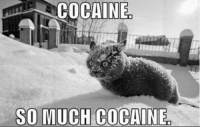 Join Animal Memes. for more funny animal memes grin emoticon Join@ Animal Memes. for more smile emoticon: COCAINE  SO MUCH COCAINE Join Animal Memes. for more funny animal memes grin emoticon Join@ Animal Memes. for more smile emoticon