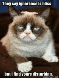 Ignorant, Grumpy Cat, and Ignorance: They say ignorance is bliss  but I find yours disturbing.