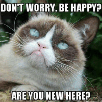 Grumpy Cat, Happy, and Happiness: DONT WORRY BE HAPPY  ARE YOU NEW HERE?