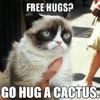 Cats, Grumpy Cat, and Good Morning: FREE HUGS?  CO HUG ACACTUS Good morning! No such thing!  Grumpy Cat. smile emoticon