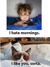 Cats, Grumpy Cat, and Smile: I hate mornings.  I like you, sorta. Join Grumpy Cat. for more smile emoticon