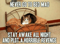 Join Animal Memes. for more smile emoticon: NEVER GO TO BED MAD  STAY AWAKE ALL NIGHT  AND PLO  ATHORRIBLE REVENGE Join Animal Memes. for more smile emoticon