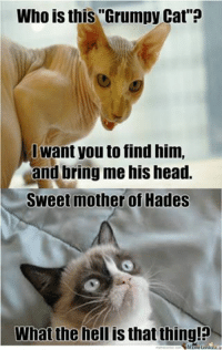 """Join Grumpy Cat. for more smile emoticon: Who is this """"Grumpy Cat  Want you to find him,  and bring me his head.  Sweet mother of Hades  What the  hell is that thing! Join Grumpy Cat. for more smile emoticon"""