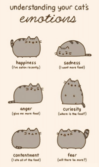 Animals, Anime, and Cats: understanding your cats  happiness  sadness  (rve eaten recently)  (I want more food)  curiosity  anger  (where is the food?)  give me more food  contentment  fear  (I ate all of the food)  (will there be more?) Join Animal Memes. smile emoticon